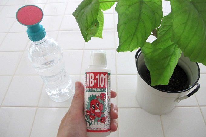 hb-101 観葉植物にも水やり