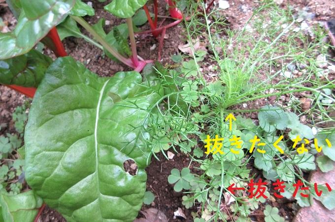 モンブラン 草取り一番百発百中 家庭菜園の草