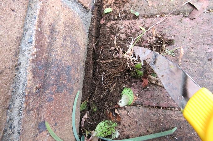 モンブラン 草取り一番百発百中 壁際の草を抜く